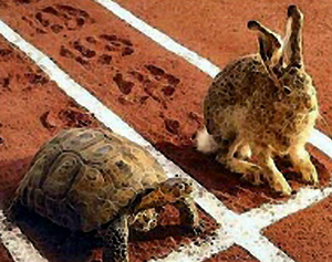 Hare Vs Tortoise Race Ya!   Shiawase Li...