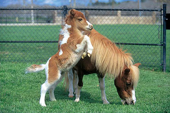 cute baby foals - photo #42
