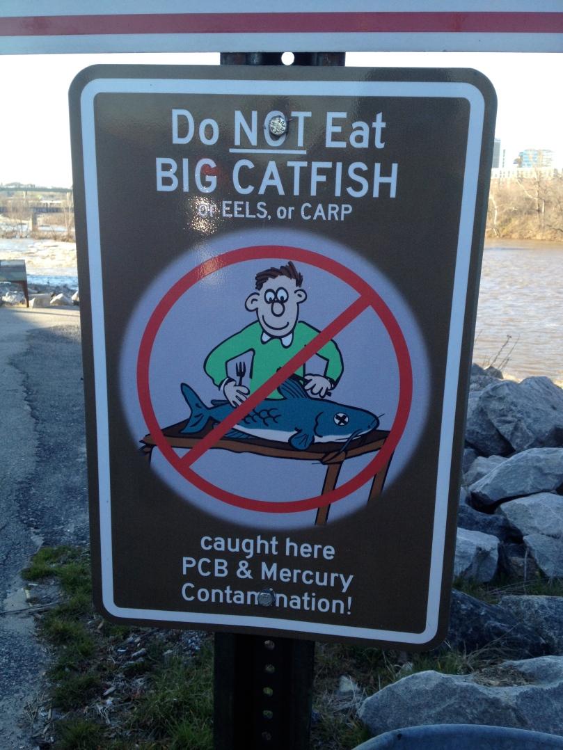 Don't eat the catfish!