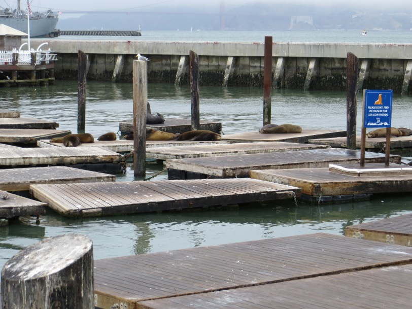 Pier 39 loungin'