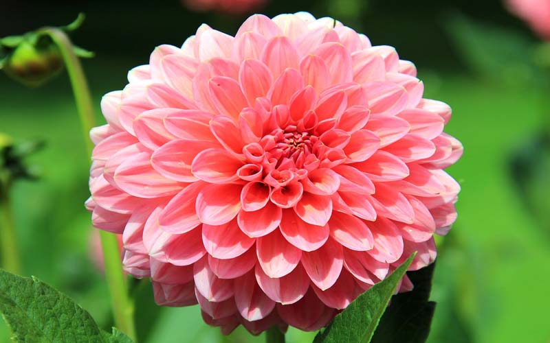 most-beautiful-flowers